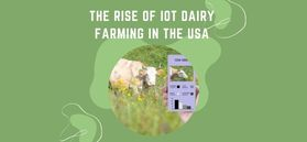 THE RISE OF IOT DAIRY FARMING IN THE USA